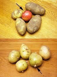 Keep-Potatoes-Fresh