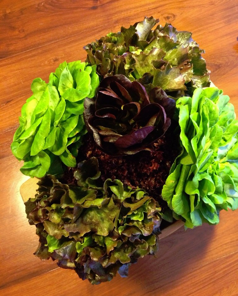 Lettuce Bouquet